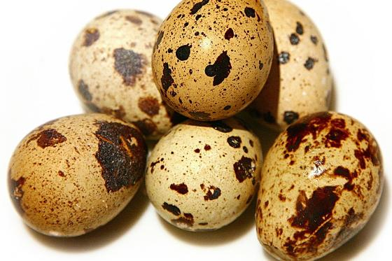 Перепелиное яйцо топпинг(20 руб.)